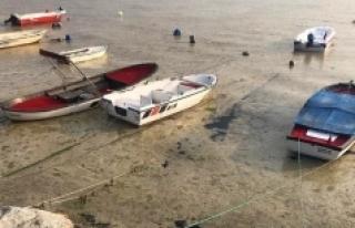 Bilim insanları 'Marmara'daki çevre felaketi'ni...