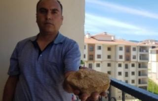 Doğa gezisinde bulduğu taş 45 milyon yıllık fosil...
