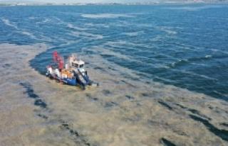 İzmit Körfezi'nde 100 ton deniz salyası çıktı