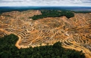 Yasa dışı ormansızlaştırma nedeniyle her yıl...