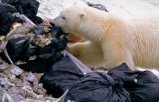 Yaşam alanları daralan kutup ayıları, deniz kuşu...