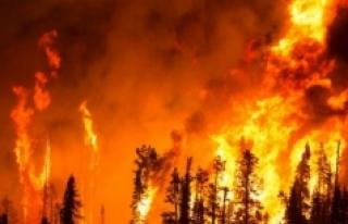 10 soruda orman yangınları