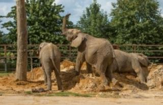 """Dünyada ilk"": Britanya'daki hayvanat..."