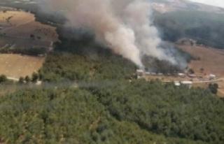 İzmir'in Bornova ilçesinde orman yangını...
