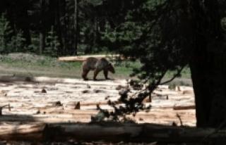 Sarıkamış Ormanları tehdit altında !