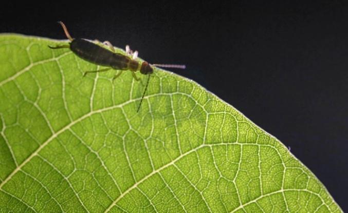 AFAD Başkanı'ndan böcek alarmı