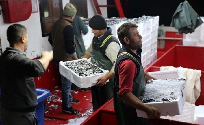 Rotalarını İğneada'ya çeviren balıkçılar bol miktarda hamsi ile döndü